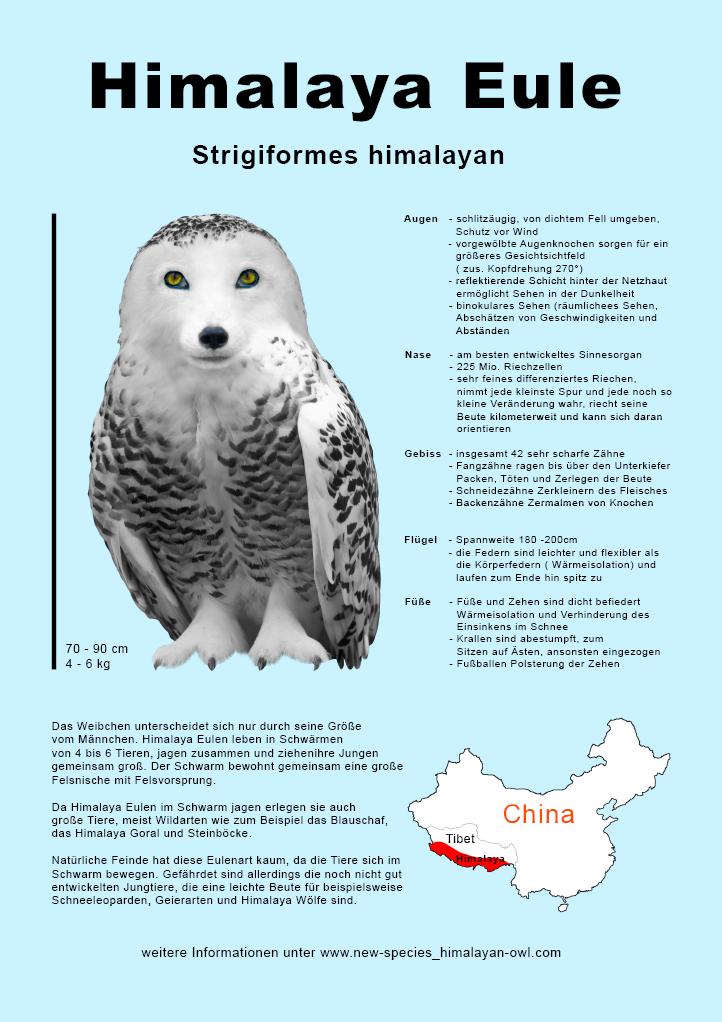 Himalaya Eule, Infoplakat